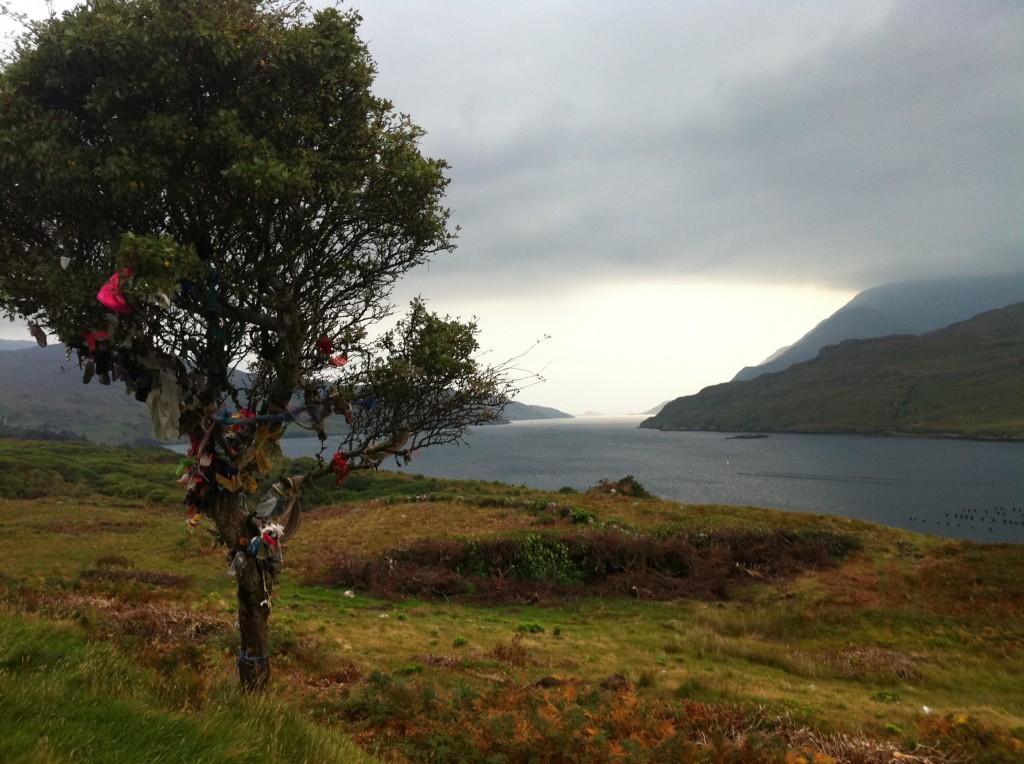 Native trees of Ireland - Hawthorn