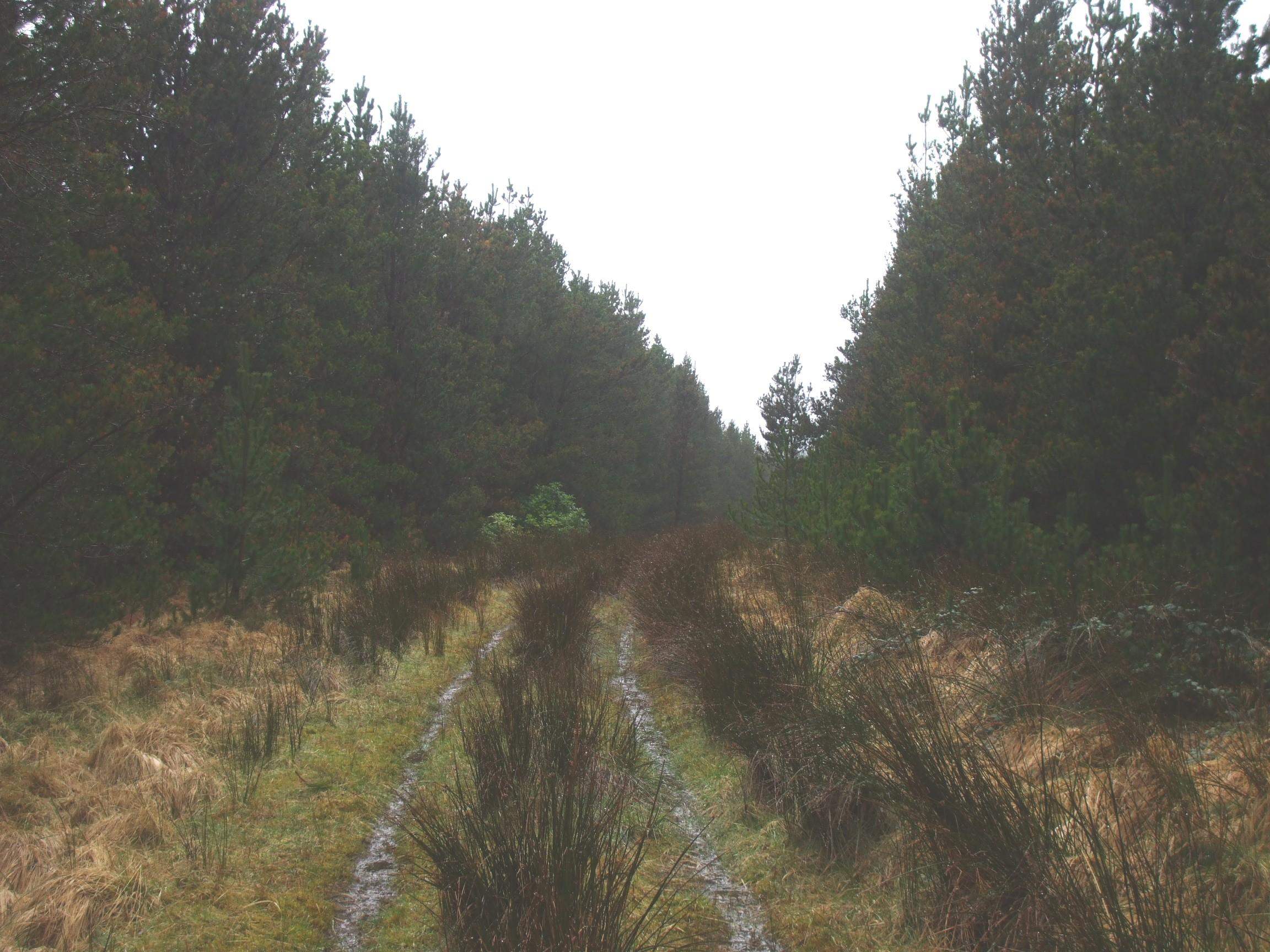 Forest track, Sheskin, Mayo