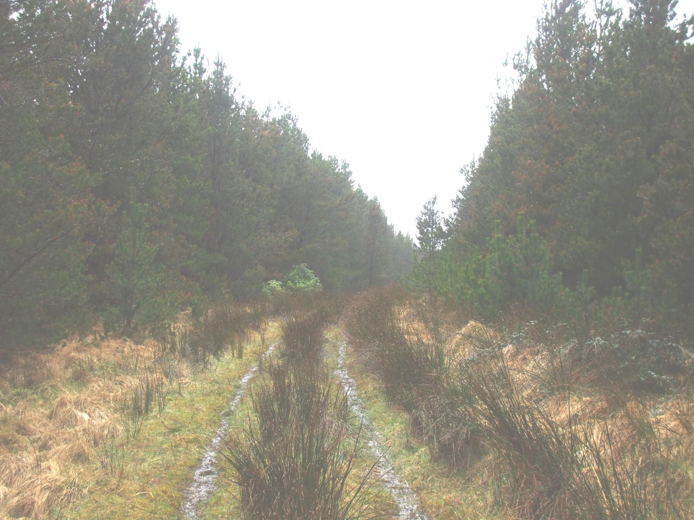 Forest track, Sheskin.