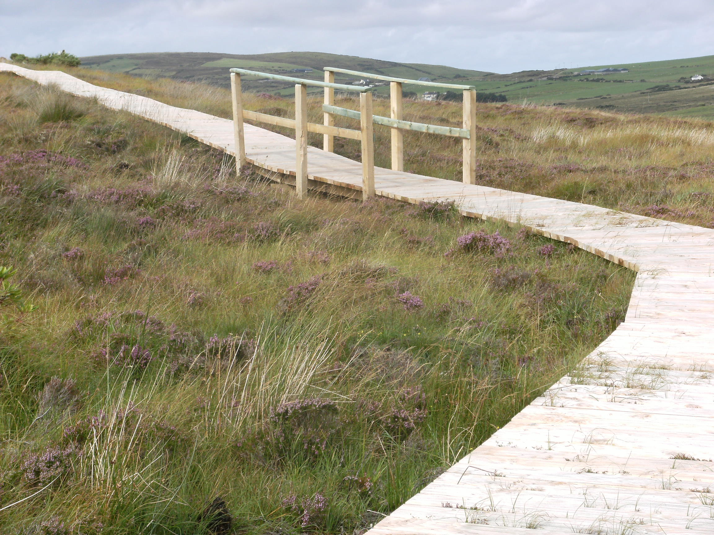 Boardwalk through Bog, Ballycroy NP.