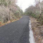 Mulranny Cycleway - Mixed woodland