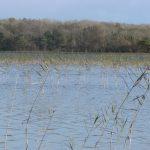 Mixed woodland, Lough Carra.