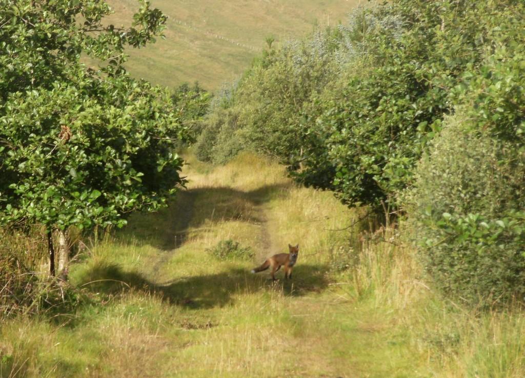 Birreencorragh, Hillwalking in Ireland