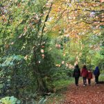 Single parent and children walking weekend