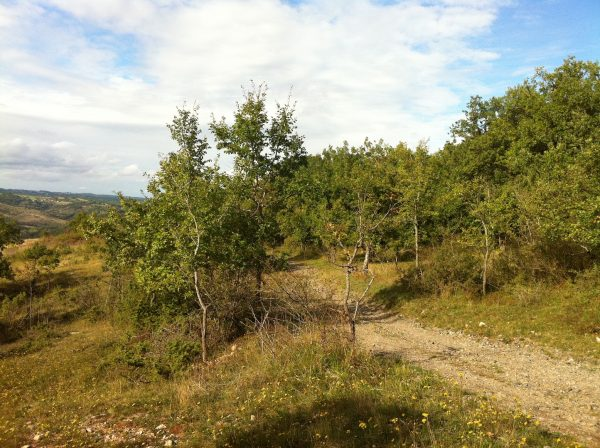 guided walking holiday in the south of france track