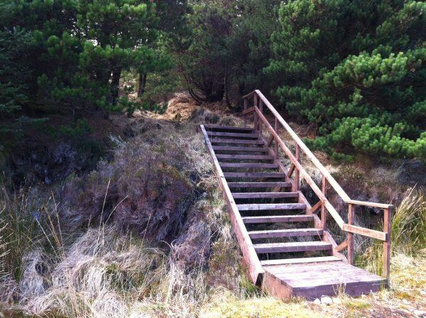 Wild Nephin steps