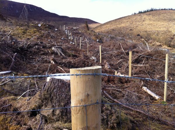 Wild Nephin fencing